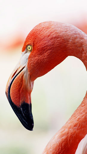 tp_bird.jpg