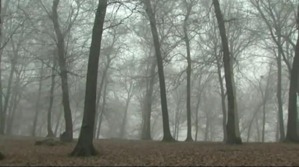 PIC 2 ป่าฮอยา